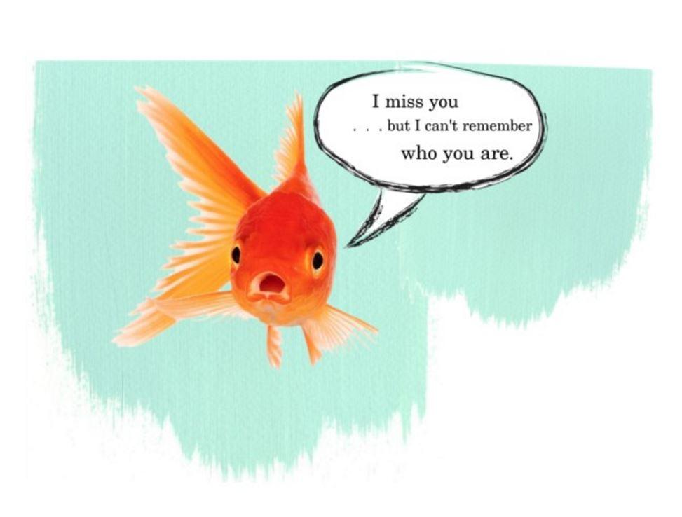goldfishmemory